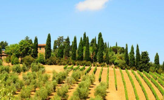 Authentiek Toscane? Bezoek een Agriturismo!