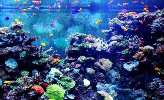 Een bezoekje aan het aquarium van Livorno