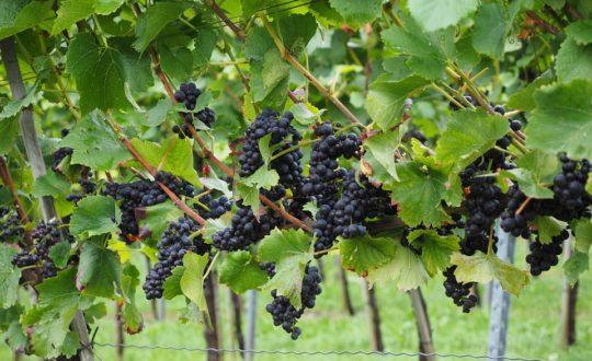 Wijntour in Toscane: goed idee!