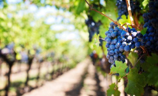 Wijnproeven in Toscane, waar moet je zijn?