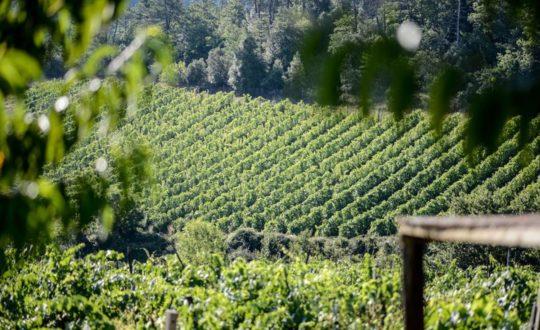 Wijnboerderijen